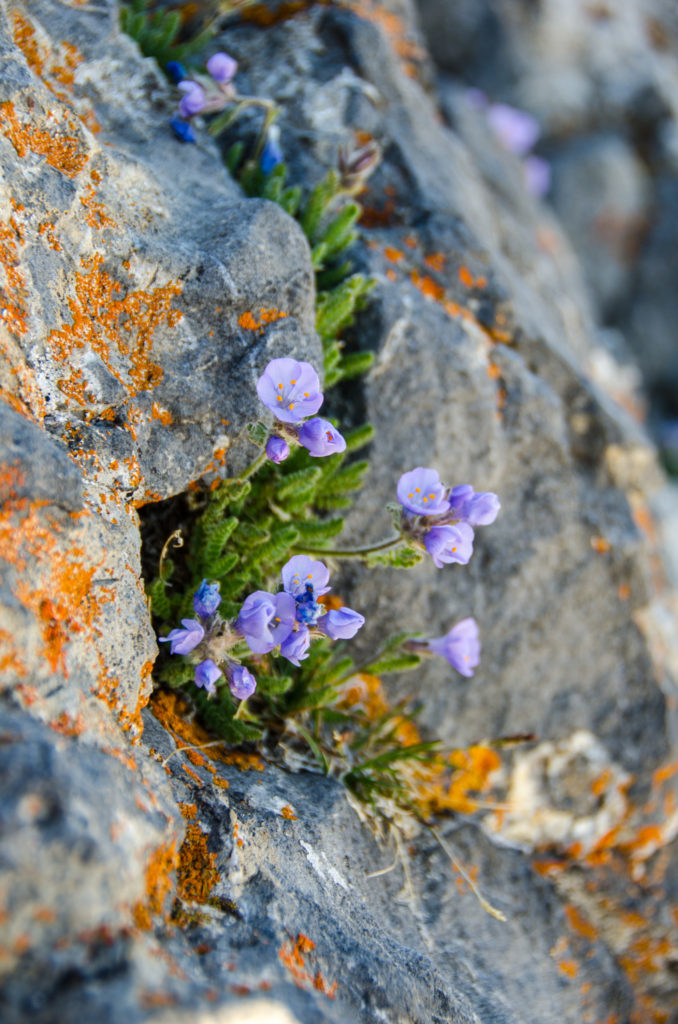 Flowers blooming from the cracks in the rock.